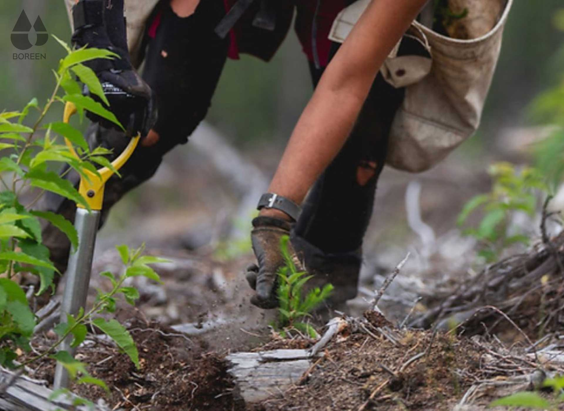 En Boreen por cada soporte de madera plantamos un árbol