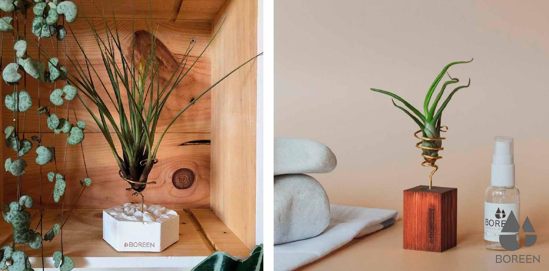 Plantas de aire mesicas en Boreen