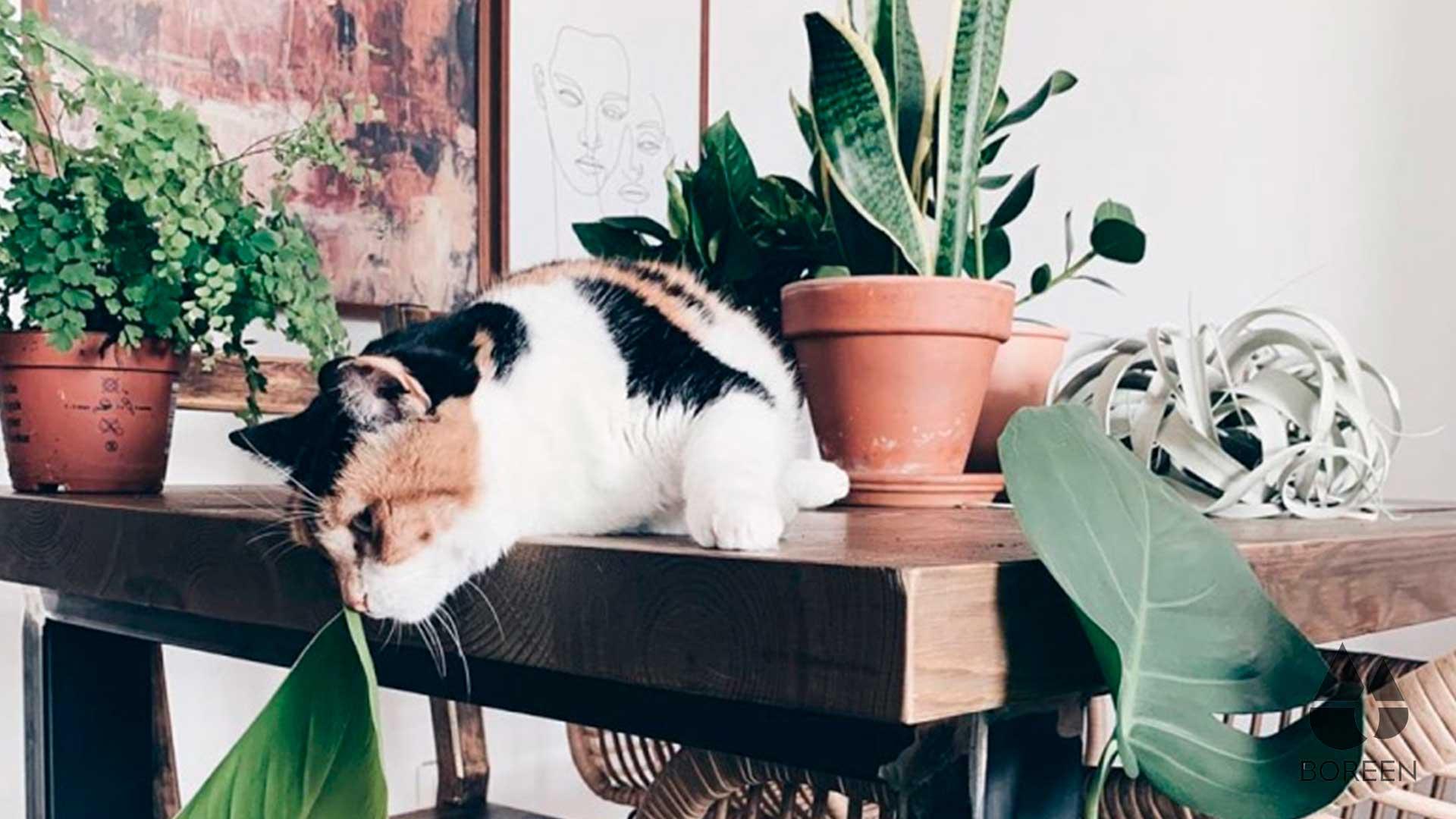 ¿Son toxicas las plantas de aire para nuestras mascotas?