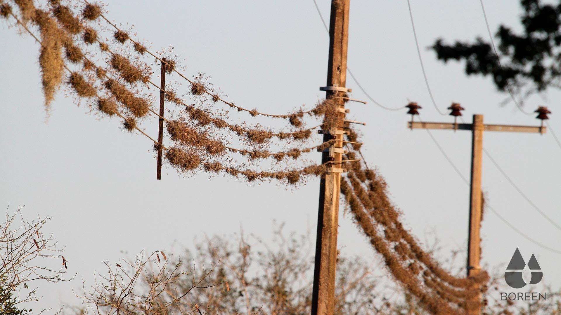 Tilladnsias en lineas telefónicas