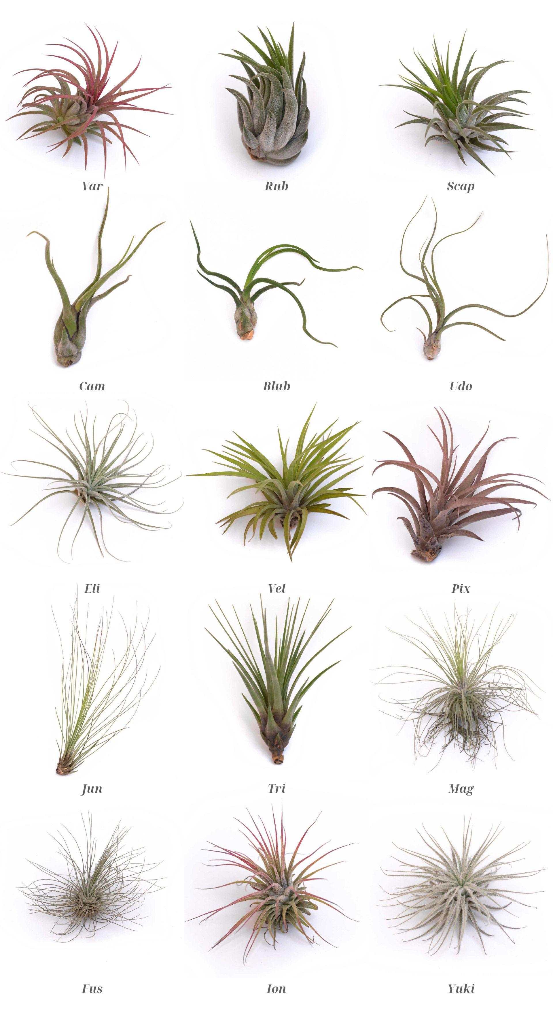 Catálogo de plantas BOREEN