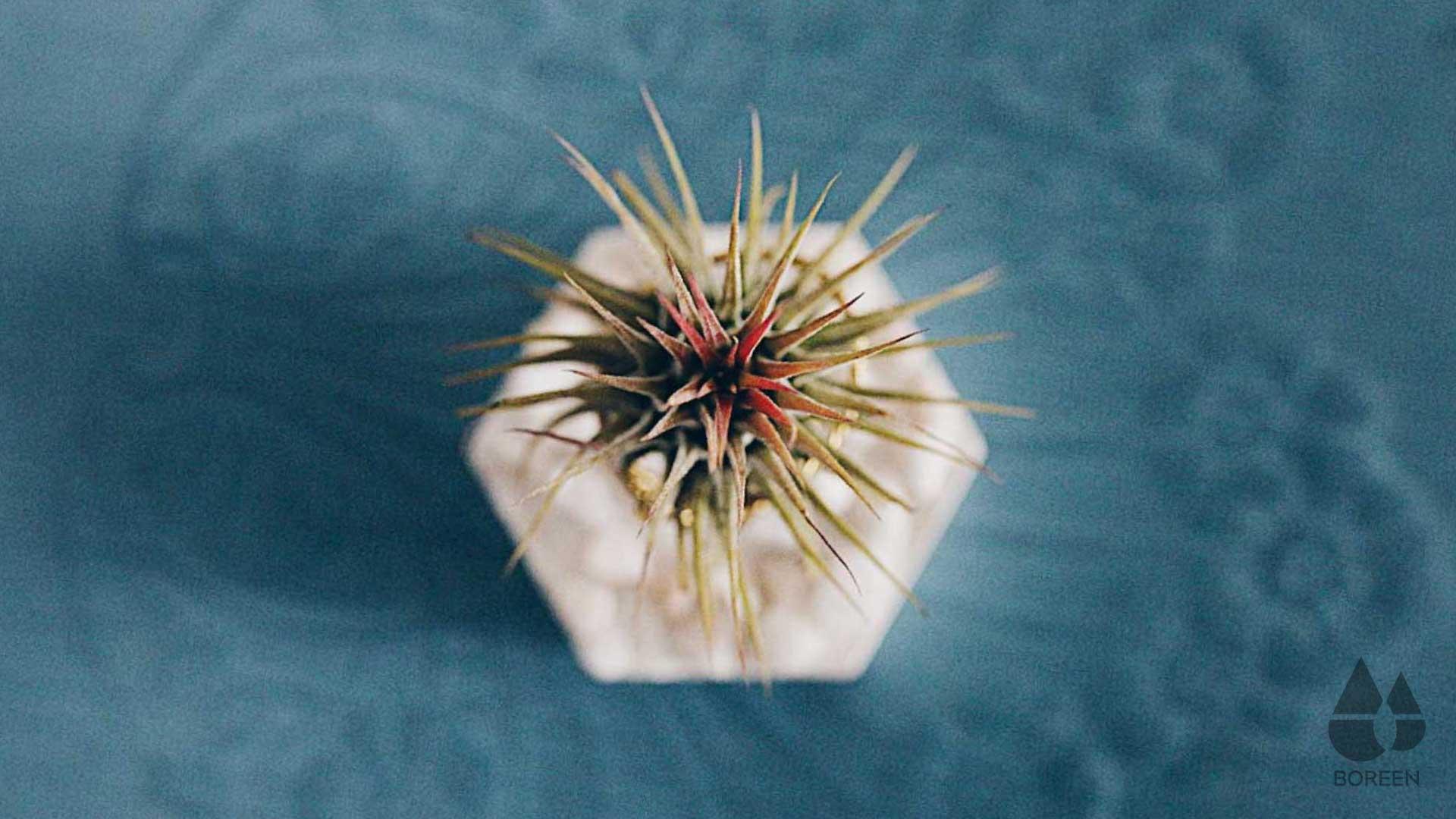 Las-plantas-purifican-el-aire