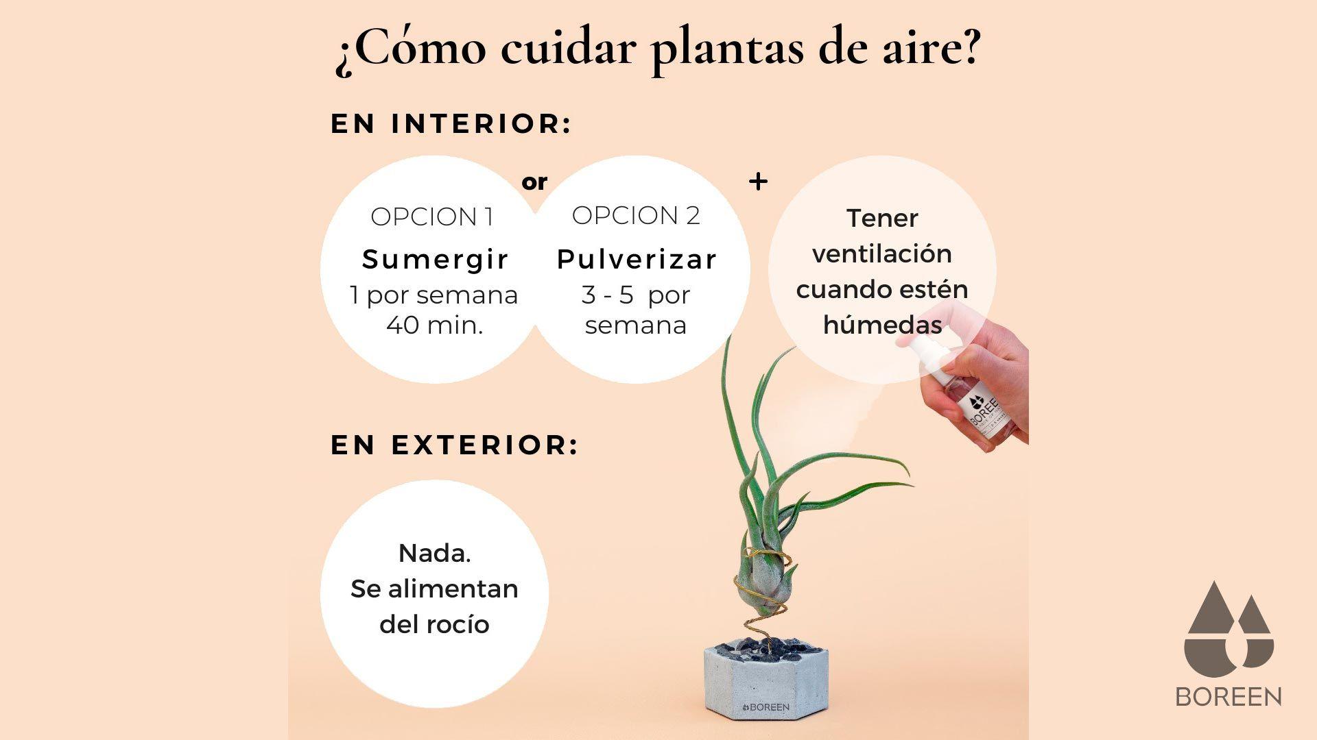 Como cuidar las plantas de aire