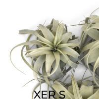 XER S