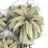 XER L