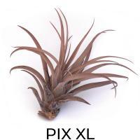 PIX XL