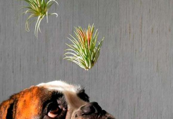 Las plantas de aire purifican  nuestra casa