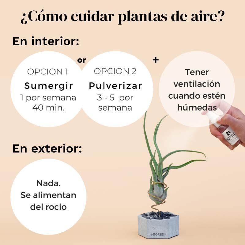 ¿Cómo cuidar de las plantas de aire?