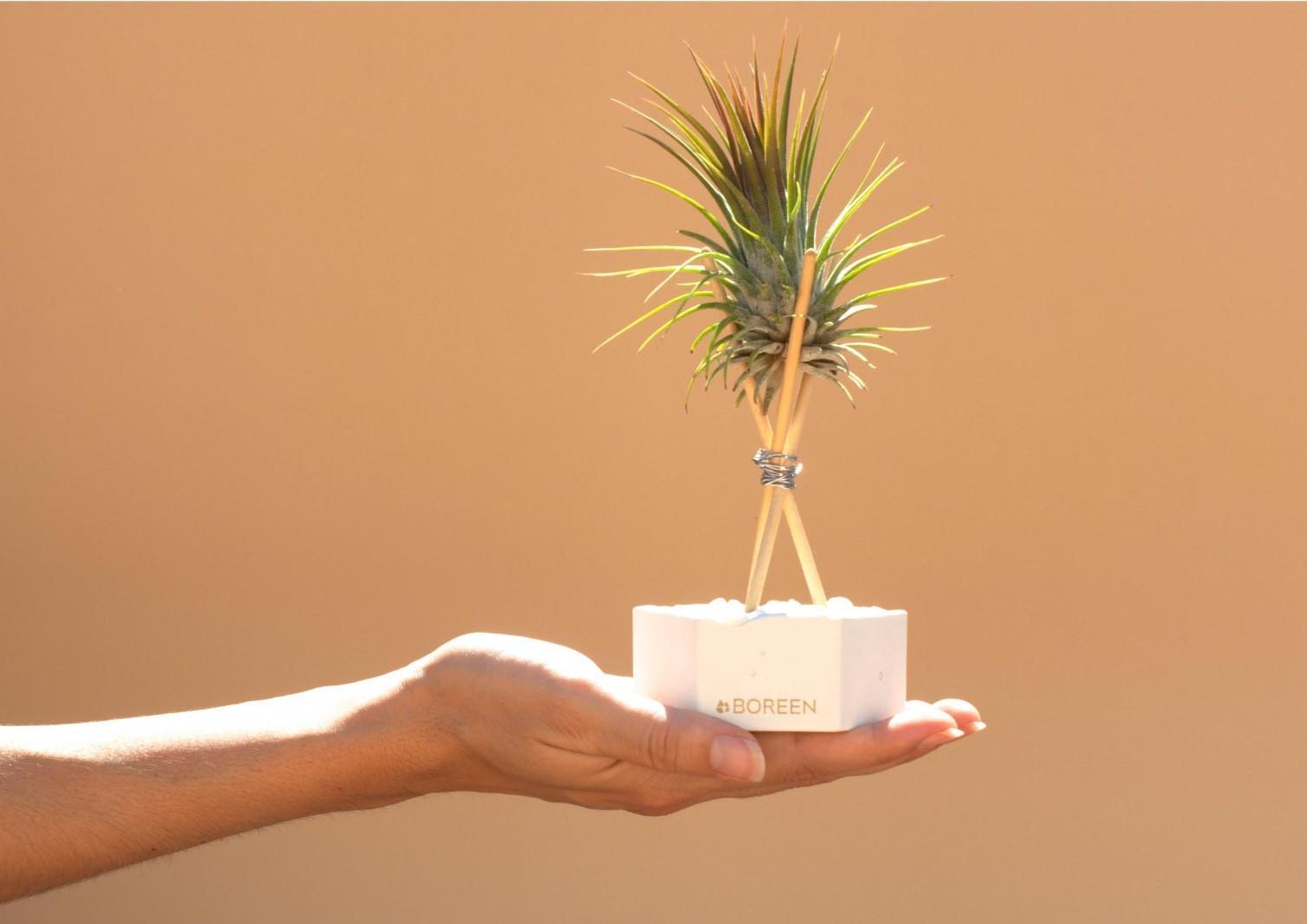 Plantas vivas sin tierra Boreen